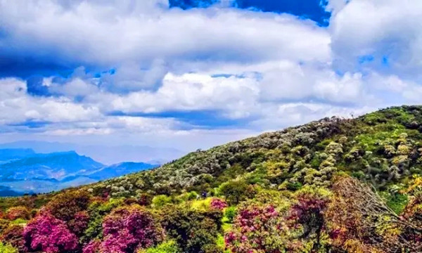 目的地介绍 大理鹤庆马耳山 在大理鹤庆的马耳山有个雁池,俗称天池。它掩藏在大山深处,距集镇步行三至四小时路程。雁池沿路溪流涓涓,花团锦簇,鸟语花香,古木参天,自然风光秀美。雁池水质明澈碧绿,与蔚蓝的天空和葱绿的群山浑然一体。站立池畔,仰望远山,险崖绝壁,奇峰峥嵘;环顾池畔,林立葱笼,野花斗艳。拂晓,薄雾如纱,晨曦微现,晨雾渐散,葱郁的古松柏,倒映池中,把一池碧水染得五光十色,随风漾彩,迷离如幻。雁池的自然景观够美了,但更令人惊叹的是她的奇,奇在多雁,唳雁击水和云歌雁舞是雁池的两大奇观。登上马耳山雁池